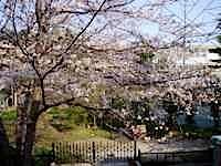現場の隣の桜の木が、ほぼ満開になりました。 以前は四月の上旬に咲いていたものがいま咲いている。温暖化の影響でしょうか。 だんだん季節感が早まっているような気がします。 現場近隣のサクラの開花状態 ページトップに戻る↑   […]
