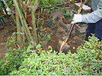 藤沢市の 「N」 様邸の造園改修工事をしました。 奥様が花卉(かき:観賞用に栽培する植物)や樹木がお好きでたくさん育てられたのですが、 これから高齢になると維持管理が大変なので、たくさんある高木 (こうぼく:丈の高い木。 […]