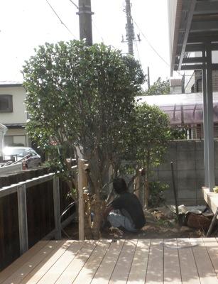 植栽、ドウダンツツジなどの移植です。 建物の工事の際には足場 […]