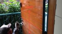 鎌倉市の「Y」様より玄関ドアの傷が目立つので補修をしてほしいと依頼されました。 木製の玄関ドアは傷がつきやすいので定期的な塗装メンテナンスが必要です。 出入りの際にはぶつかって細かい傷が出来、その凹みが黒ずみます。そこに […]
