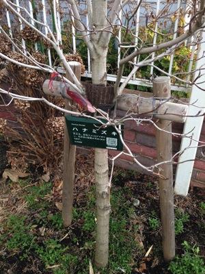 樹木の銘板