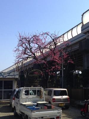 事務所桜  バージョン 2