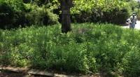 暇を見つけて年に二回ほど茨城の飛び地に草刈りに行く事をしてい […]