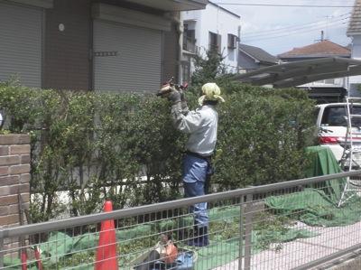樹木のメンテナンス